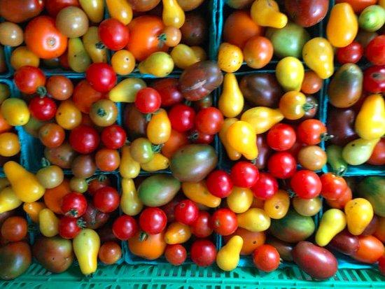 Hamburg, NY: All sorts of Tomatoes!