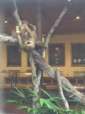 Ecoterra Costa Rica: Lucy the sloth