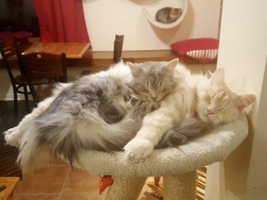 Chelsea, Canada: Cat Salon