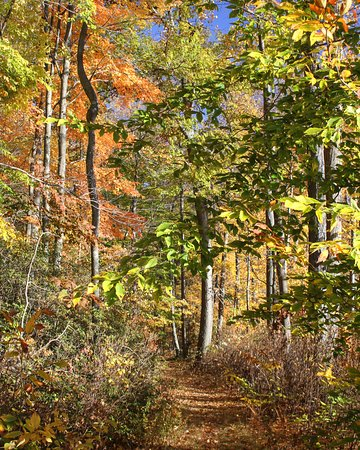 Woodbury, CT : Hiking Trail at Whittemore Sanctuary