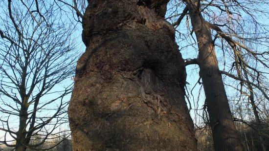 Cobham, UK: Ashenbank wood