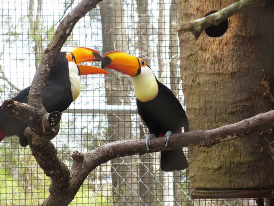Scotland Neck, NC: toucans
