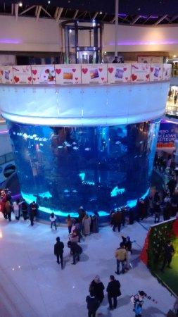 الدار البيضاء, المغرب: Super aquário!
