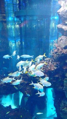 الدار البيضاء, المغرب: Muitos peixes!