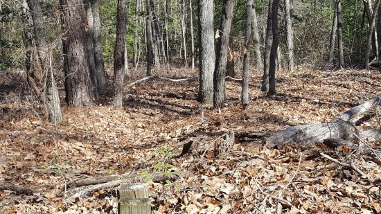 Four Oaks, Carolina del Norte: remains of union earthworks