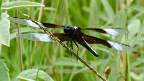 College Station, TX: Dragonfly at Lick Creek Trail