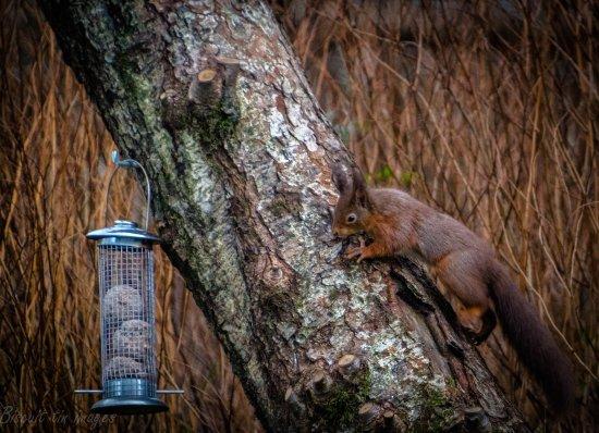 Loch Eck, UK: local wildlife right on the door