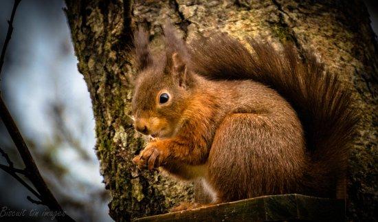 Loch Eck, UK: munching