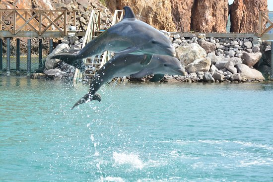 Dolphin Discovery St. Kitts