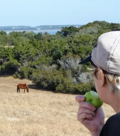 Shackleford Banks: From a distance, watching a wild horse graze and checking me out while I gazed and checked it ou