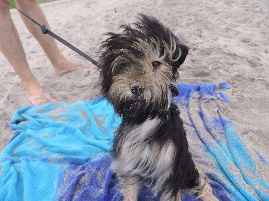 Pensacola Beach: windy day