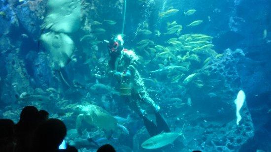 Oga Aquarium Gao Photo
