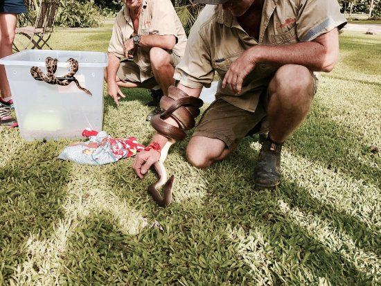 Diwan, Австралия: photo2.jpg