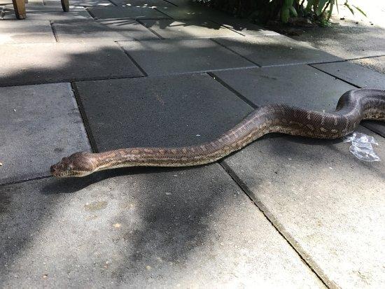 Diwan, Австралия: photo3.jpg