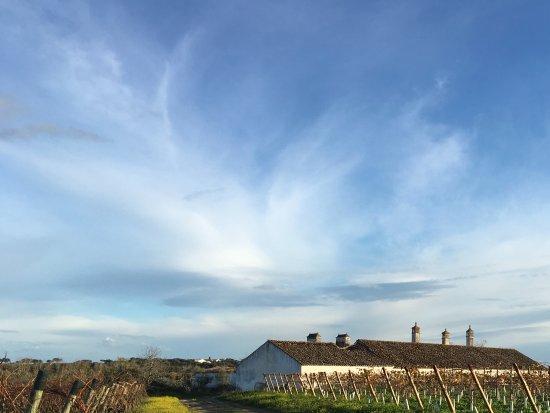 Redondo, Portugal: The vineyard