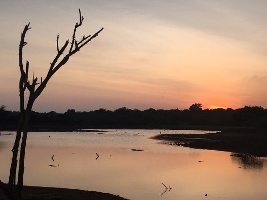 Cinnamon Wild Yala : Lake in front of the hotel. Nice walk in the evening. There are crocodiles in the lake