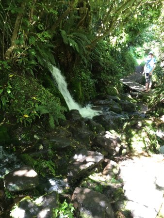 Taranaki Region, New Zealand: On the 'naked' (without boardwalk) part of the loop, step across stones to pass the waterfall.