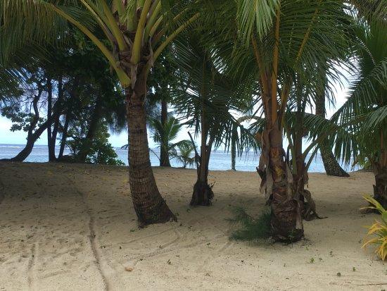 Aroa Beach-billede