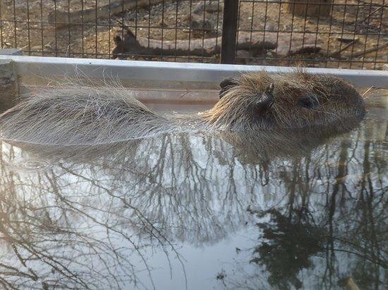 こども動物自然公園, 入浴中