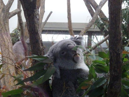 こども動物自然公園, コアラもいるよ