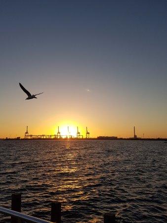 Port Phillip, Australia: Another seagull