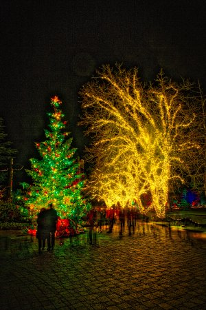 Butchart Gardens: Christmas time in the gardens