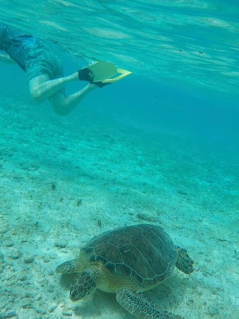 Bodden Town, Grand Cayman: Snorkeling with Turtles at Spotts Beach, 10 minute drive