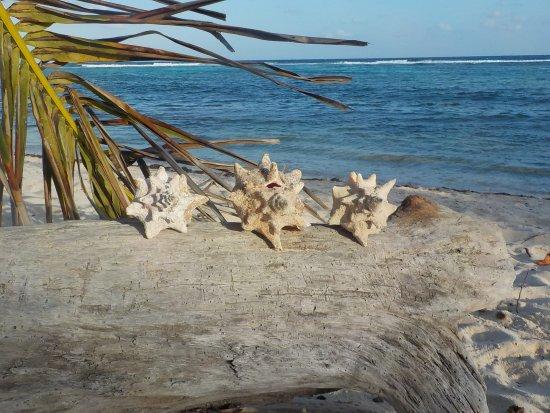 Bodden Town, Grand Cayman: Clear, warm water, Turtle Neck Inn Beach