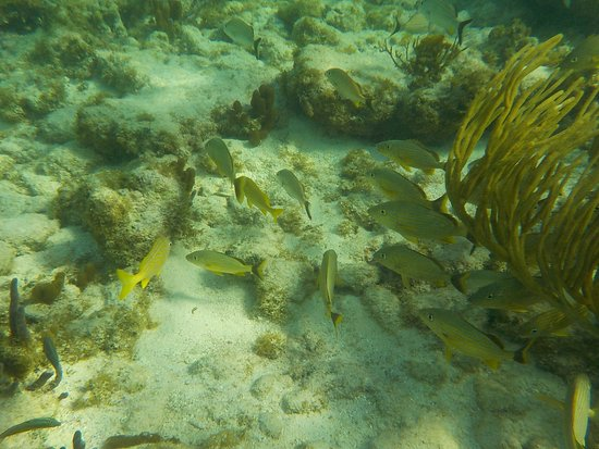 Bodden Town, Grand Cayman: Snorkeling at Turtle Neck Inn