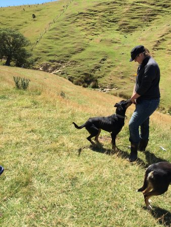 Akaroa Farm Tours