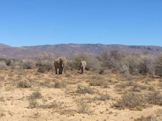 Ceres, Zuid-Afrika: Elephants