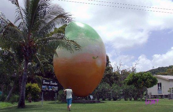 Bowen, Australia: Big Mango