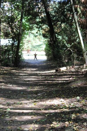 Redwood Park Photo