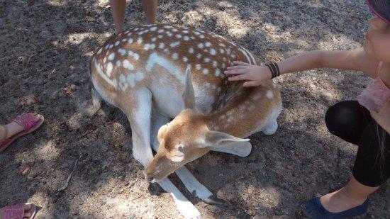 Byford, Australia: Bambi