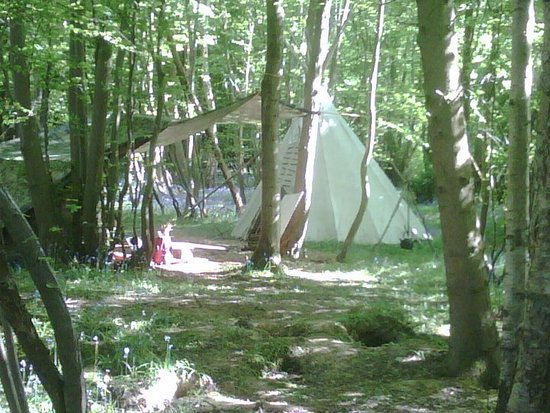 Uckfield, UK: Beautiful bluebell woodland with tipis and yurts