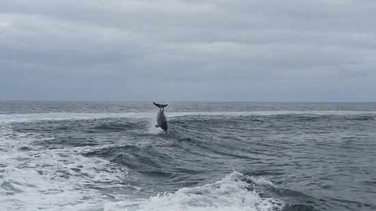 Kingscote, Australia: A dolphin having a play on the wake from our boat.