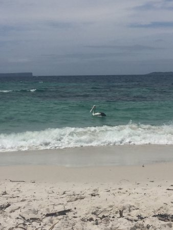 Hyams Beach: photo1.jpg