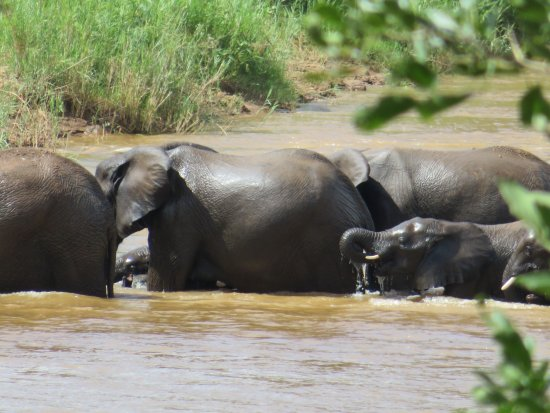 Pondoro Game Lodge: Elephants in river below the bar/dining area