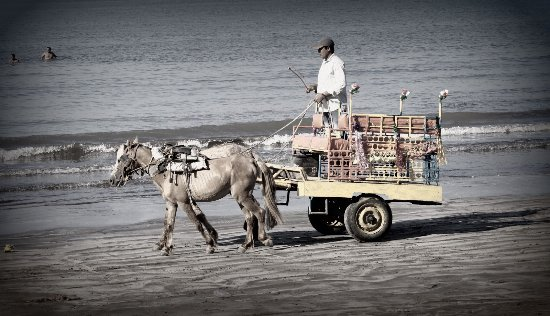 Palghar, India: Horse Cart