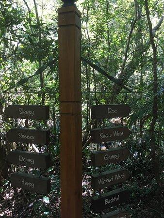 The Mouses House Rainforest Retreat: photo8.jpg