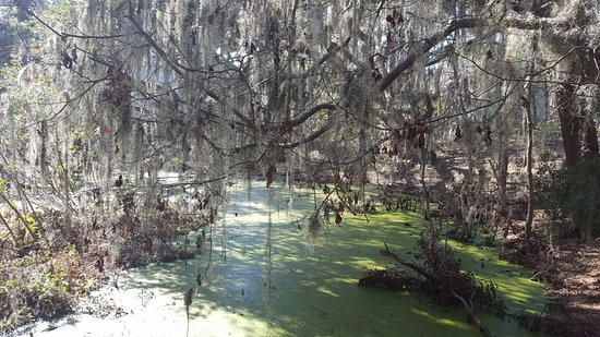 Port Royal, SC: Cypress wetlands 4
