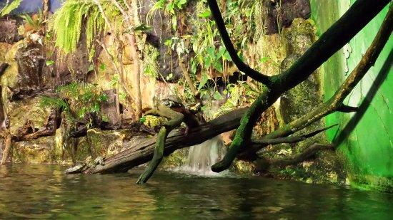 Grand Aquarium : Des tortues de Florides se prélassent