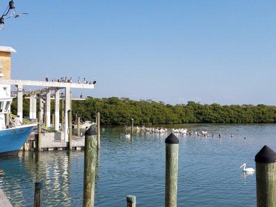 Cortez, FL: photo1.jpg