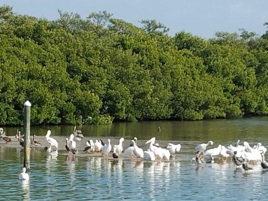 Cortez, FL: photo2.jpg