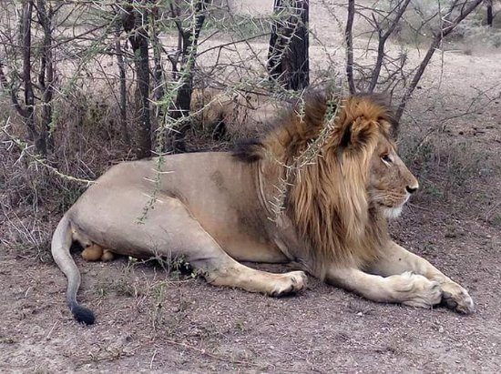 Kitawa Tours and Safaris Limited