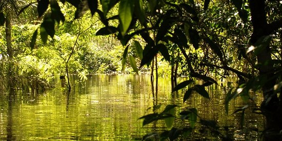 Amazonas by Viverde