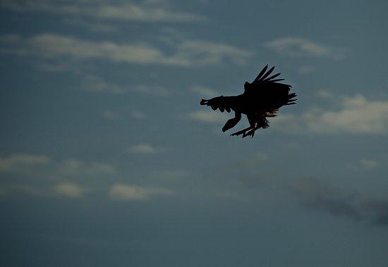 Bilde fra Klaserie Private Game Reserve