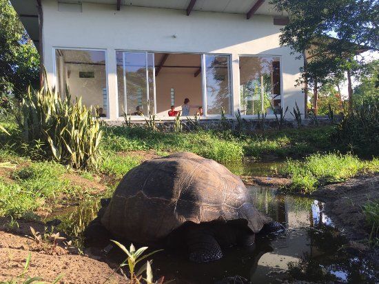 Semilla Verde Boutique Hotel: Enjoying our daily yoga with a resident tortoise.