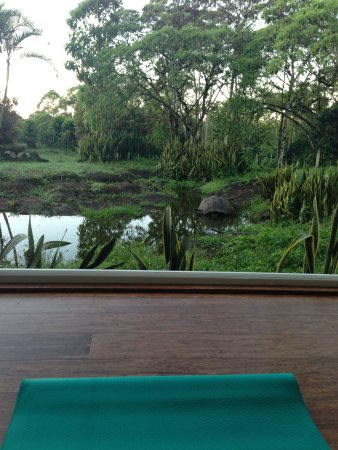 Semilla Verde Boutique Hotel: My yoga view.