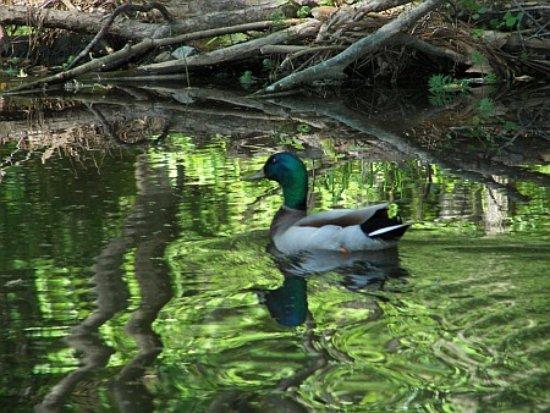 San Lee Park Nature Center